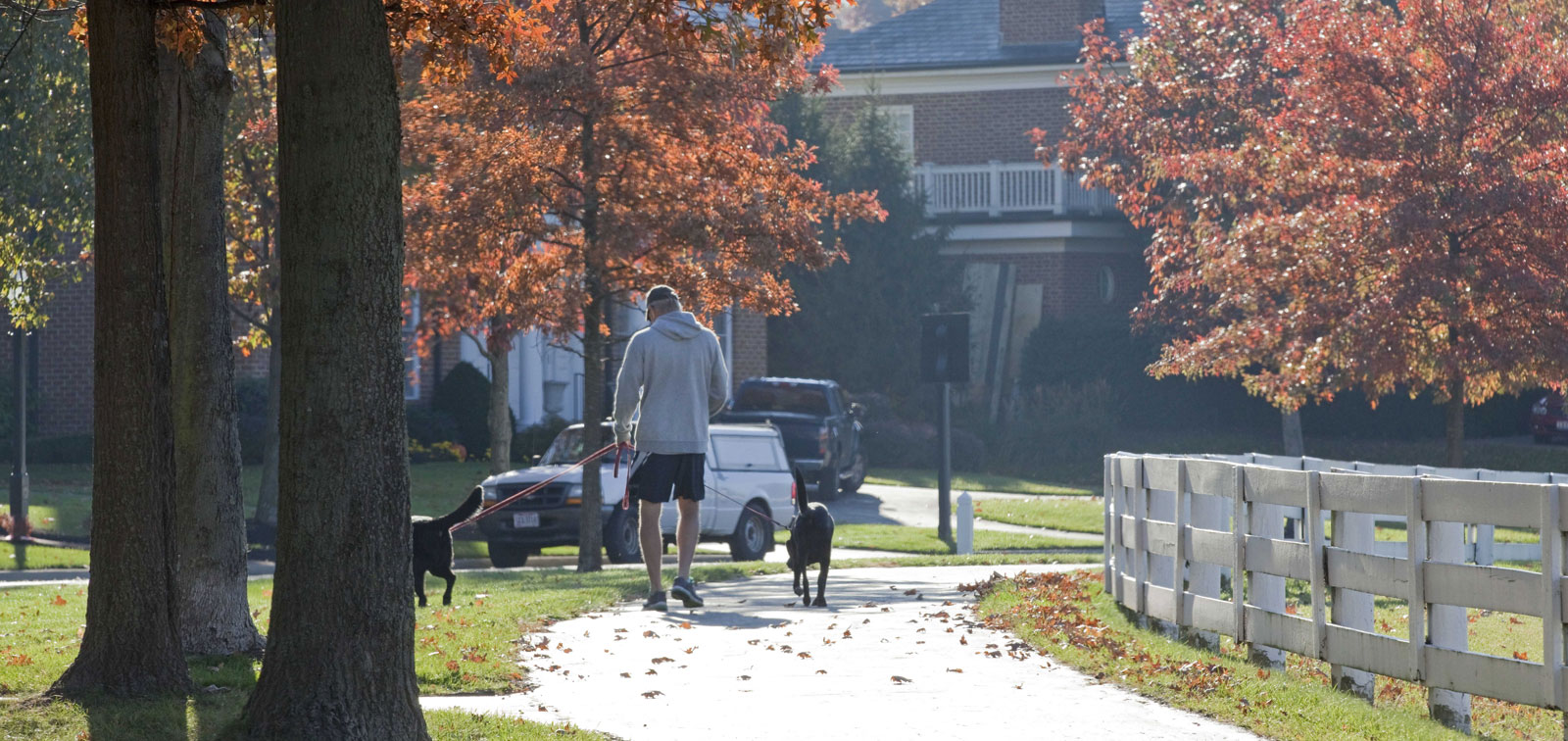 Man walking his dogs on a New Albany trail next to white fence